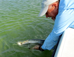 Releasing tarpon while flyfishing the flats of the Turks and Caicos
